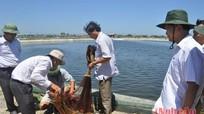 Nghiệm thu mô hình nuôi tôm theo quy trình Viet Gap tại Quỳnh Bảng (Quỳnh Lưu)