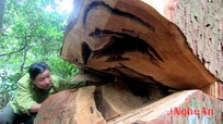 Thường trực Tỉnh ủy chỉ đạo xử lý việc chặt phá rừng trái phép