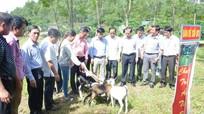 Gia đình cố bác sỹ Minh Hồng: Tặng dê giống cho hộ nghèo ở xã Ngọc Sơn