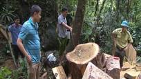 Thêm 1 vụ phá rừng nghiêm trọng tại Khu Bảo tồn thiên nhiên Pù Hoạt