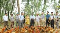 Viện Chăn nuôi nghiệm thu Dự án chăn nuôi gà tại Nghi Lộc