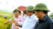 1,2 triệu tấn lương thực - bước đột phá của  Nghệ An