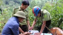 Quế Phong: Kiểm tra tận thu, tận dụng gỗ tại khu bảo tồn thiên nhiên Pù Hoạt