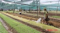 Khó mở rộng diện tích sản xuất rau an toàn