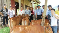 Báo Nghệ An trao bò đợt 3 cho hộ nghèo xã Xiêng My (Tương Dương)