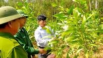 Trồng rừng thay thế người dân được hỗ trợ giống keo và phân bón