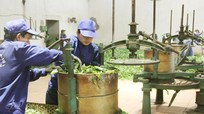 Đẩy mạnh tái cơ cấu ngành nông nghiệp