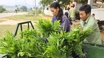 Cấp gần 100.000 cây giống cho người dân Quế Phong