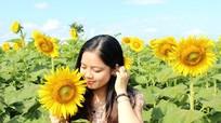 Hàng nghìn người đổ về Nghĩa Đàn chiêm ngưỡng cánh đồng hoa mặt trời