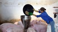 Chủ động phòng dịch bệnh trên đàn vật nuôi