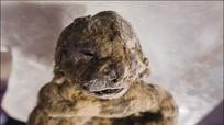 Phát hiện xác đôi sư tử 12.000 năm còn nguyên vẹn