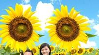 Cánh đồng hoa hướng dương xứ Nghệ - những góc nhìn lạ
