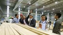 Nhà máy chế biến gỗ Nghệ An và ưu thế trong sản xuất ván ép thanh