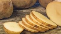 Khoai tây giúp tránh ung thư dạ dày