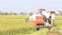 Chuyển gần 5.500 ha đất trồng lúa sang các loại cây trồng khác