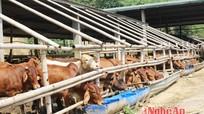 Nghệ An hiện có trên 380 trang trại chăn nuôi