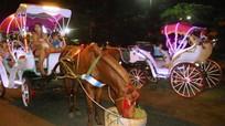 Khám phá những điểm du lịch trên vó ngựa tại Việt Nam
