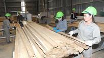 Ra mắt sản phẩm gỗ ván ép mới