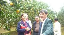 Tỉnh Xiêng Khoảng (Lào) tìm hiểu mô hình trồng cam tại Quỳ Hợp