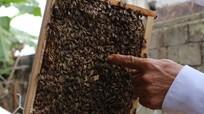 Ngọc Sơn (Đô Lương): Nhân rộng mô hình nuôi ong lấy mật