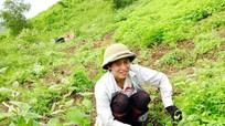 Chàng trai chăn dê Nghệ An lại gây sốt với bản cover đường tình đôi ngả