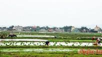 Công điện khẩn chống rét cho cây trồng, vật nuôi