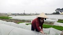 Nông dân Yên Thành tăng cường phòng chống rét