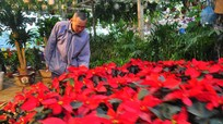 Muôn sắc chợ hoa thành phố Vinh ngày cận Tết