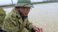 Quỳnh Lưu chống rét cho cây trồng, vật nuôi