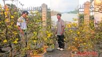 Thành phố Vinh sẽ tổ chức 6 chợ hoa xuân phục vụ Tết Nguyên đán 2016