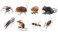 5 cách xua đuổi côn trùng ra khỏi nhà