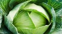 Lợi ích sức khỏe từ bắp cải
