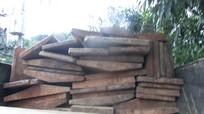 Bắt giữ hai xe chở 3m3 gỗ quý trái phép trên quốc lộ 7
