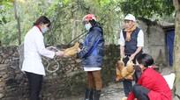 Diễn Châu: Tập trung tiêm phòng chống bệnh cúm gia cầm
