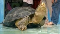 Ôm rùa 14 kg ngủ suốt đêm vì sợ mất