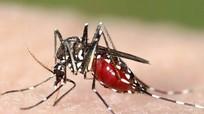 Virus Zika có thể xuyên qua nhau thai sản phụ