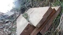 Tịch thu gỗ khai thác trái phép ở Kỳ Sơn