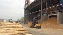 Thăm nhà máy chế biến gỗ hiện đại nhất Đông Nam Á