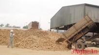 Nhà máy tinh bột sắn Intimex: Tiêu thụ 140.000 tấn sắn củ/năm