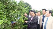 Chủ tịch UBND tỉnh thăm và làm việc tại huyện Con Cuông