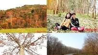 Chiêm ngưỡng vẻ đẹp miền Tây Nghệ An mùa cây thay lá