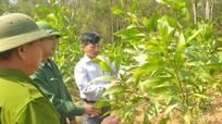 Nghệ An huy động gần 1.900 tỷ đồng bảo vệ, phát triển rừng