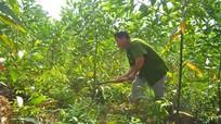 Nghệ An có 47.500 hộ gia đình tham gia bảo vệ và phát triển rừng