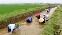 Quỳnh Lưu: Nạo vét 50 km kênh mương thủy lợi