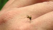 Ba con đường lây nhiễm chính của virus Zika