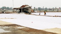 Quỳnh Lưu: 50 ha đất nông nghiệp bị xâm nhập mặn