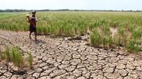 Hơn 500.000 người thiệt mạng vì hiện tượng nóng lên toàn cầu