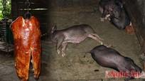 Video cận cảnh lò thịt quay bẩn Giao Hiền