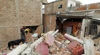 Động đất ở Ecuador: Huy động chó nghiệp vụ tìm người
