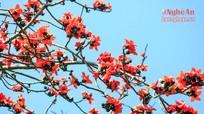 Rạo rực mùa hoa gạo xứ Nghệ